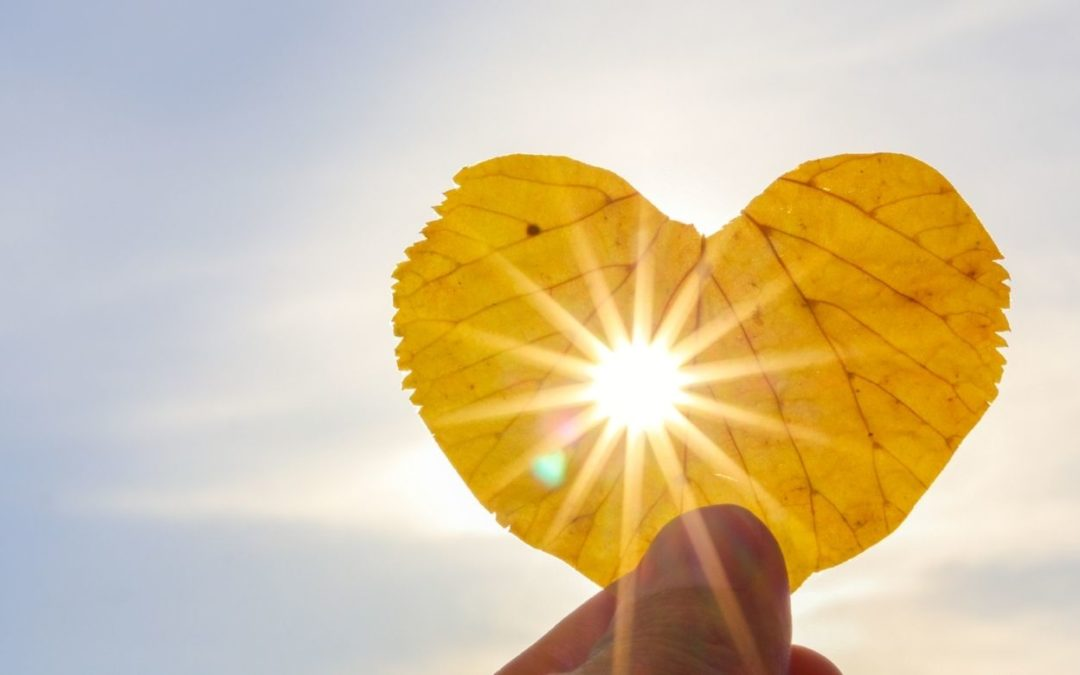Heart shaped leaf with lens flare representing a more effective way to be of service